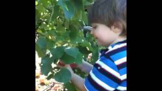 Apple Picking (part 1)