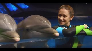 Download The Incredible Life of a Dolphin Trainer Mp3 and Videos