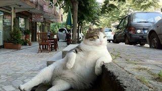 Смешное видео  про животных.Подборка смешных приколов с кошками 1.Смотреть всем.
