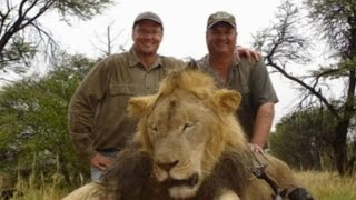 Outrage After Dentist Slaughters Cecil the Protected Lion on Zimbabwe Trip