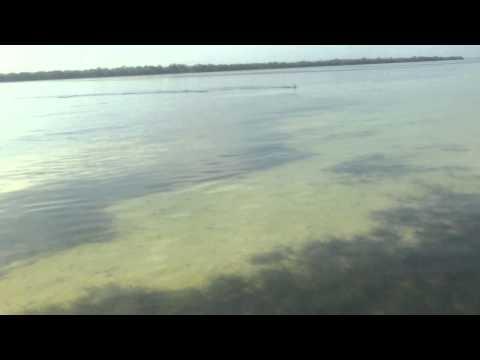 SW Florida wade fishing