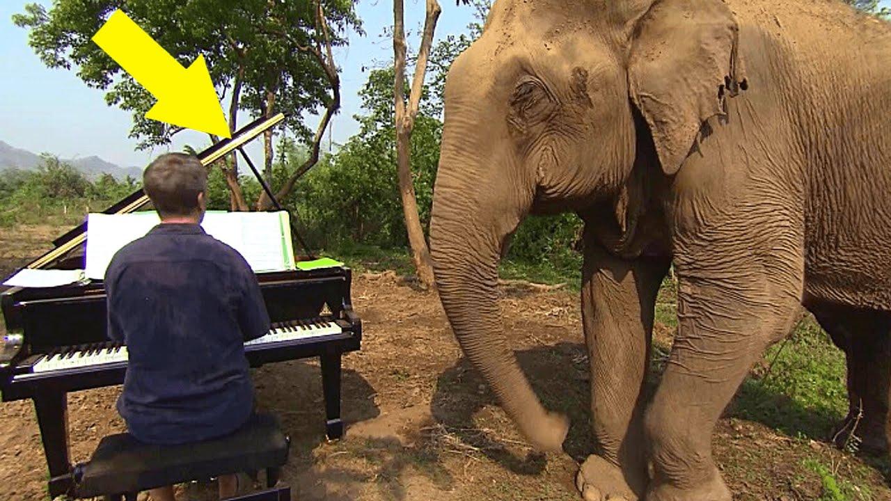 Mann spielt Klavier für blinde Elefanten, mit der Reaktion hätte niemand gerechnet...