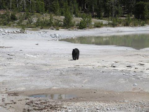 Backpacking Yellowstone National Park: The 9 Day Shoshone Lake, Madison Lake, Summit Lake Loop