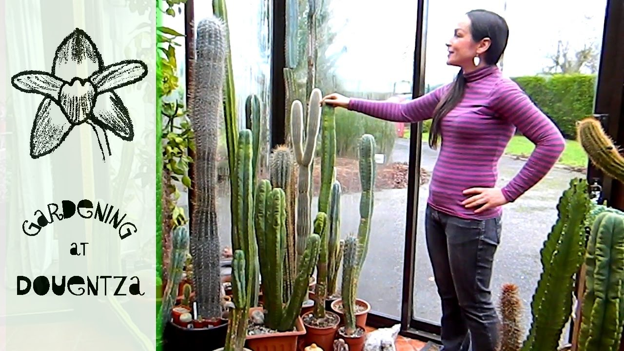 A Visit To Desert Plants Of Avalon Lyn S Cactus Addiction Youtube
