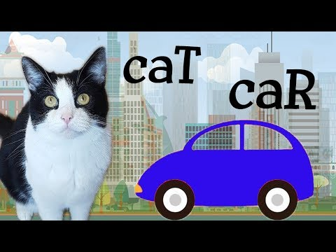 The CAR and the CAT - do we have common relatives?