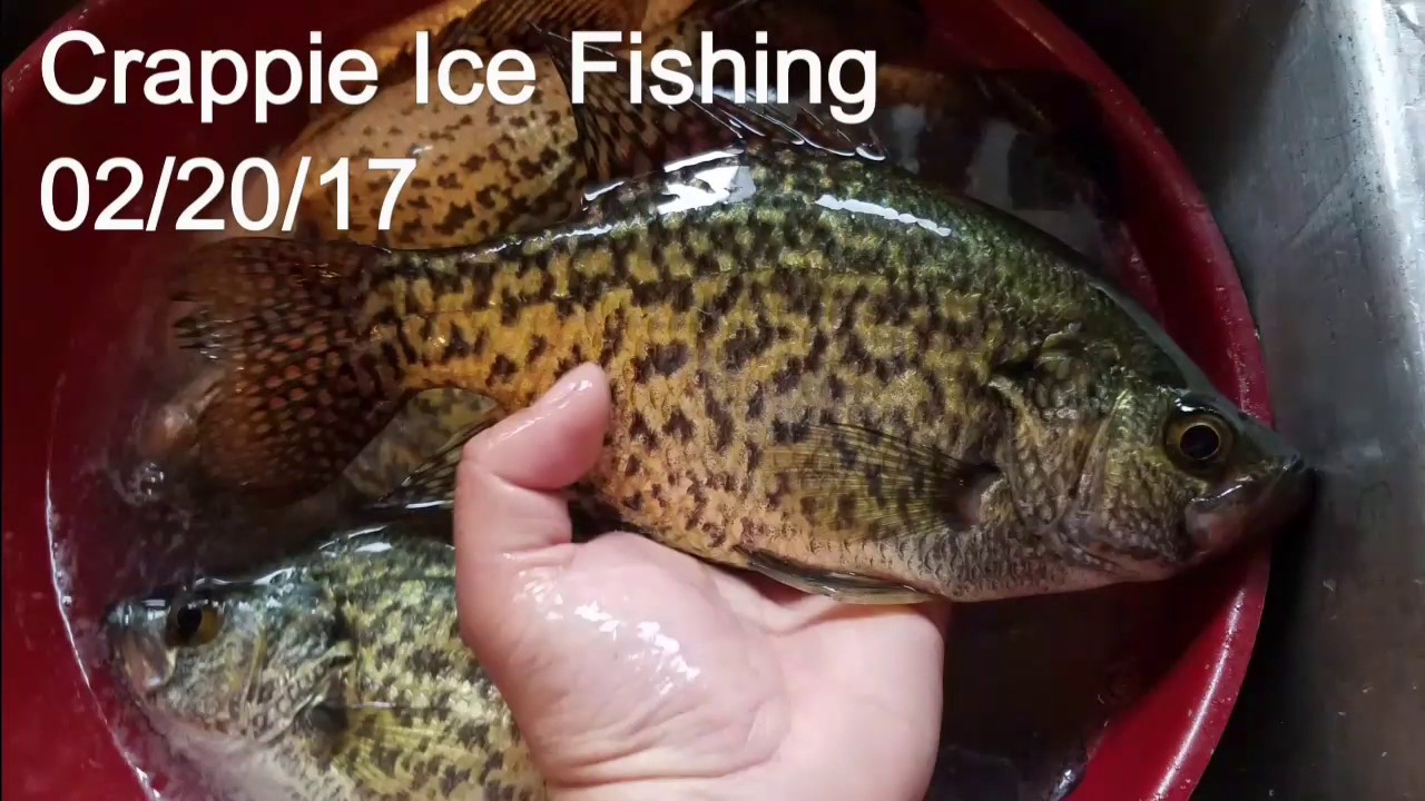 Minnesota crappie ice fishing youtube for Crappie ice fishing