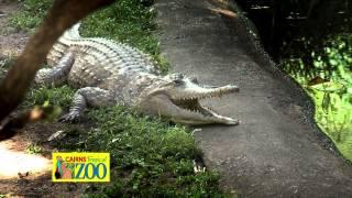 Cairns Tropical Zoo TVC - Crocodile Show