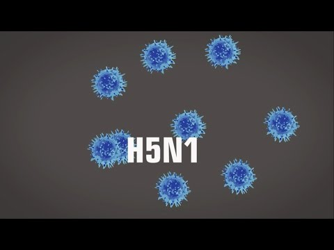 Animation how to prevent avian flu