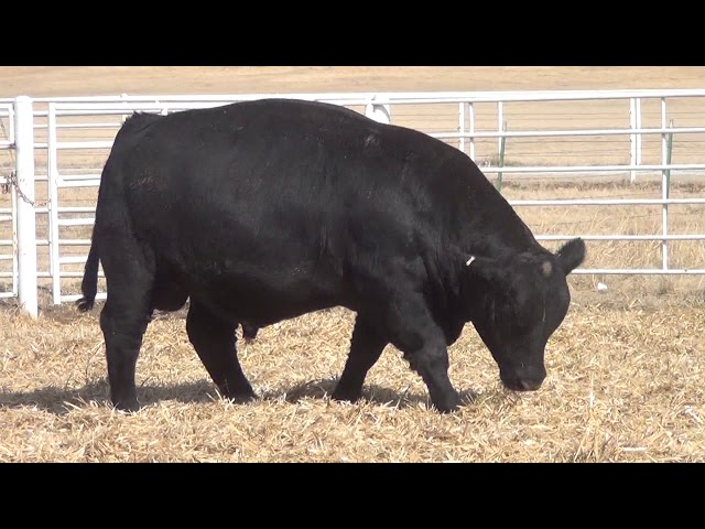 Express Ranches Lot 376