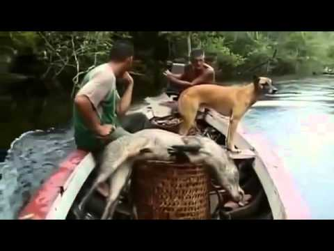 Animal Planet   The Amazon rainforest   Biodiversity at its best