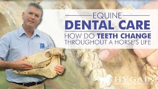 Equine Dental Care  - Teeth Issues affecting horse health