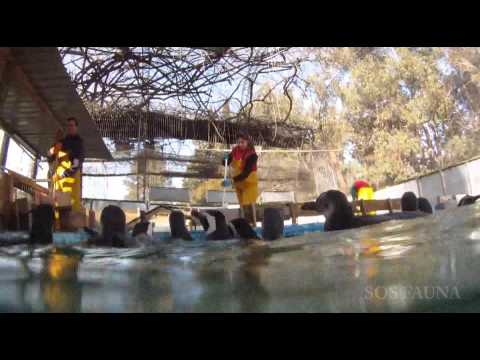 Penguin Rescue Centre SOCOBIOMA Uruguay
