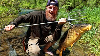 Spearfishing 30 lbs River Carp (using AMISH FISH SPEAR!) | 'The Quest for Carp' Catch, Clean, Cook