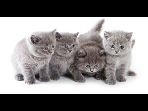 Giochi di gattini gratis