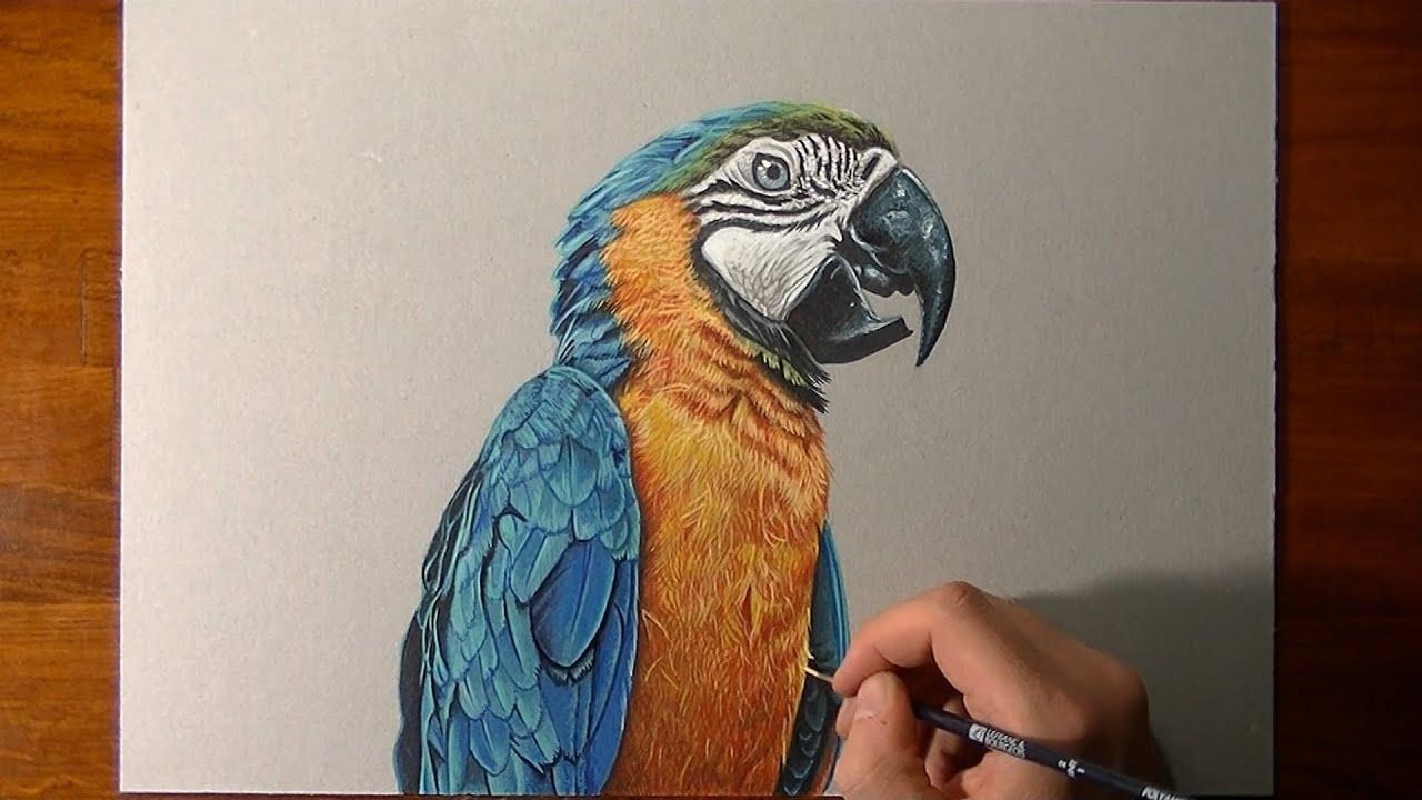 Famoso Disegno realistico in timelapse: un pappagallo - YouTube MU23