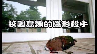 八里國中鳥類友善窗戶示範影片(窗殺防治)