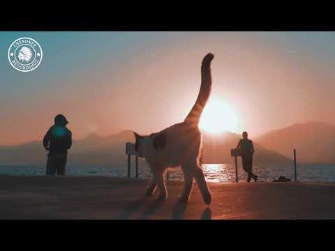 Dani Corbalan - Ankara (Official Video)
