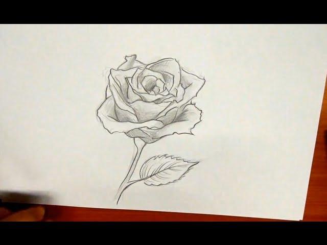 Como Desenhar Uma Rosa Fácil E Bonita Com Lápis Ou Carvão