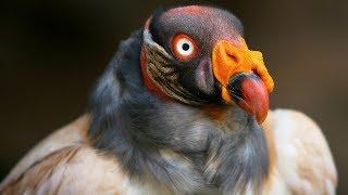Las aves más exóticas del Amazonas