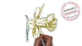 Нарисованные цветы  Как нарисовать незабудку простым карандашом поэтапно(Как нарисовать дружную семью поэтапно карандашом за короткий промежуток времени. Видео рассказывает о..., 2014-07-02T05:48:36.000Z)