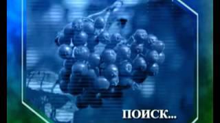 Биология 17. Органы чувств. Брусника. Водомерка — Академия занимательных наук