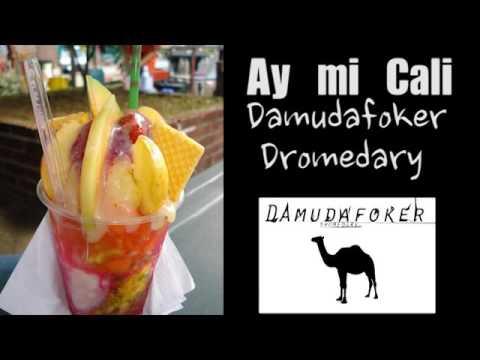 Mi Cali-damudafoker dromedary- Berrebe&Djkapitan
