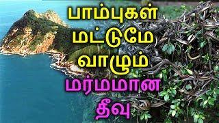 பாம்புகள் மட்டுமே வாழும் மர்மத் தீவு   Snake island   TAMIL ONE