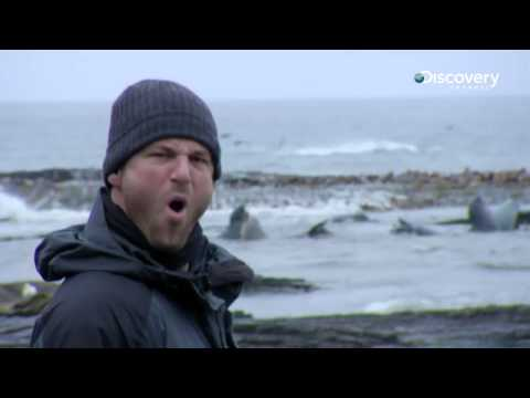 Killer Whale Island | Mystery Of The Lost Islands