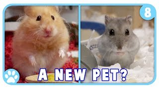 IKEA Hamster Products + Are We Getting New Pets? || Vlogstice Day 8