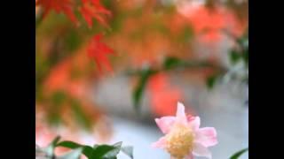 自分で撮った花写真とポエム集です。