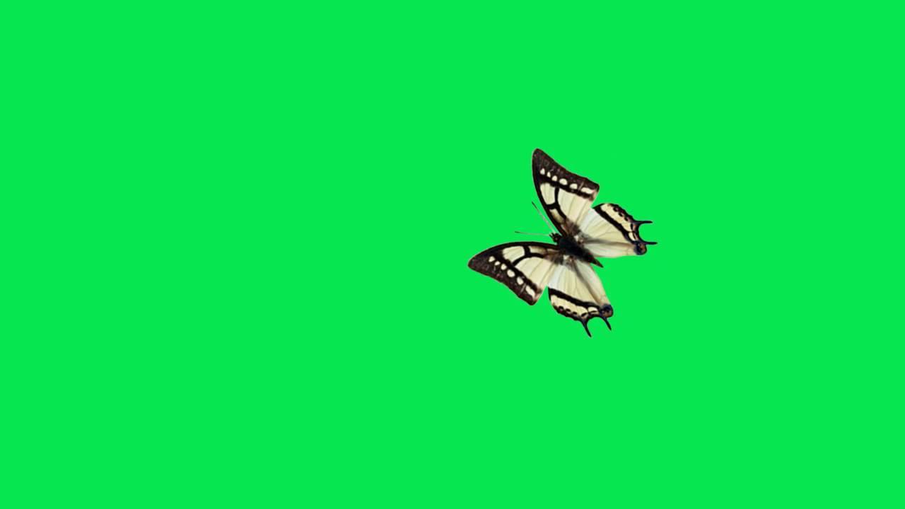фото зелёные бабочки