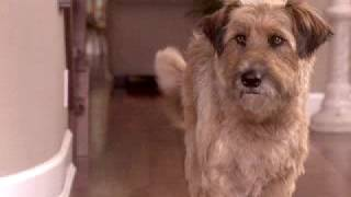 Dr. Dolittle 3 (2006) - Official Trailer