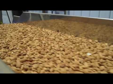 Almond sorting machines Helius and Genius - TOMRA Sorting