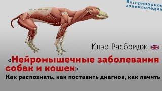 видео Мочекаменная болезнь у собак: причины, симптомы, лечение