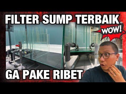 FILTER SUMP AQUARIUM TERBAIK - GALLERY IKAN PREDATOR #2
