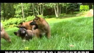 """更多""""狗狗101"""" 消息請上""""動物星頻道(台灣)"""" FB粉絲團及www.nevermissdis..."""