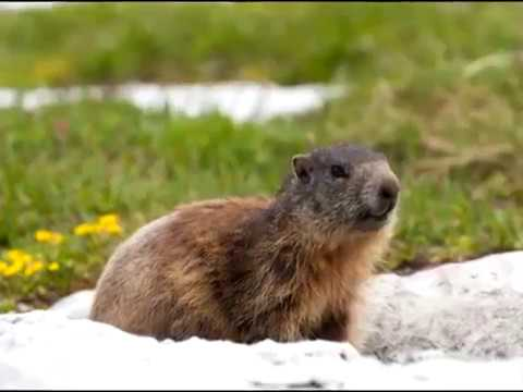 If you're looking for a Groundhog Day love song, this video is for you