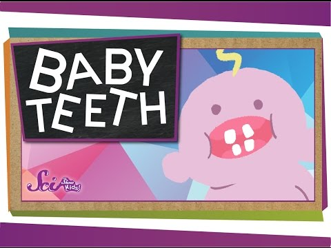 Why Do We Have Baby Teeth?