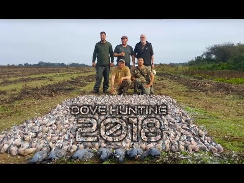 Dove Hunting In Argentina 2018