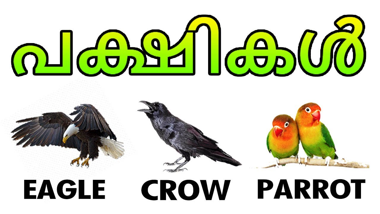 Learn Names Of Birds Birds Names With Pictures Vocabulary Malayalam Educational Video Youtube
