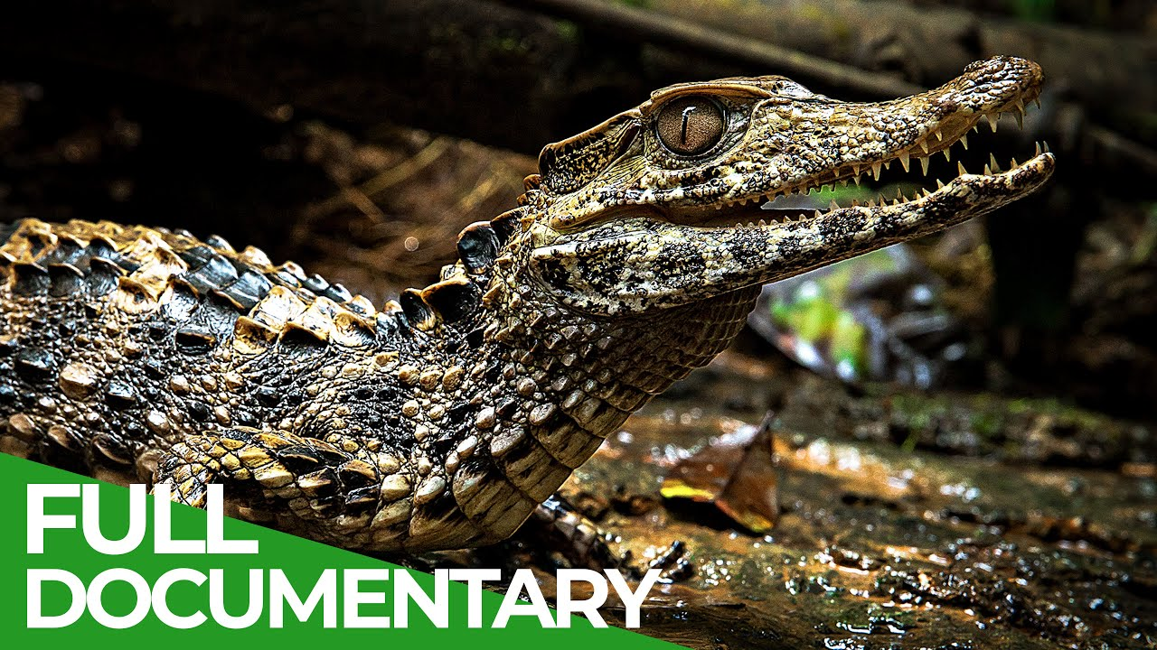 Download Uncharted - The Beautiful World of the Amazon | Free Documentary Nature