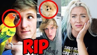 logan-paul-s-parrot-and-dog-dead-my-problem-with-logan-paul-and-his-animal-care