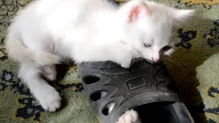 #Приколы. #Озвучка!Кошка Мурка родила котёнка.Малютка котёнок! Как назвать котёнка?