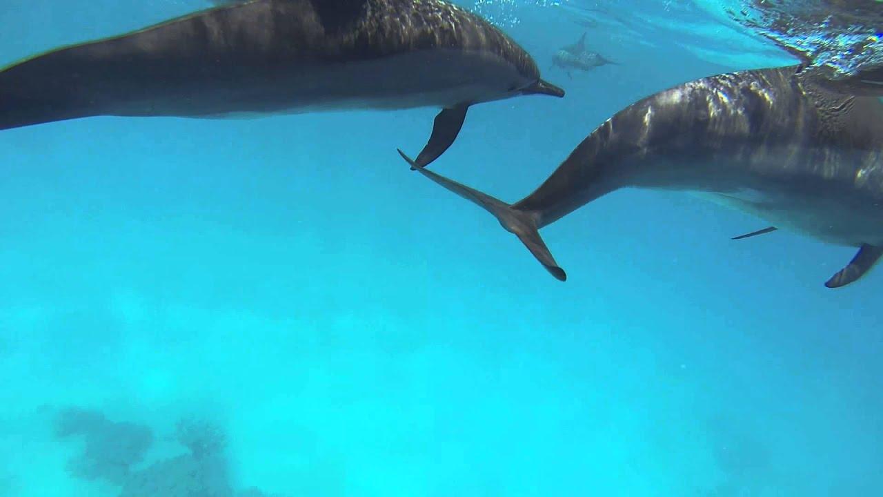 Дикие дельфины в открытом море - YouTube