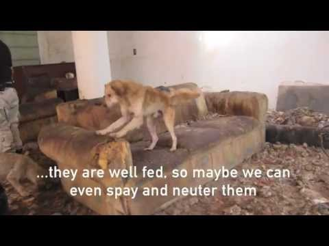 Animals Rescued from Cruelty in Mexico City
