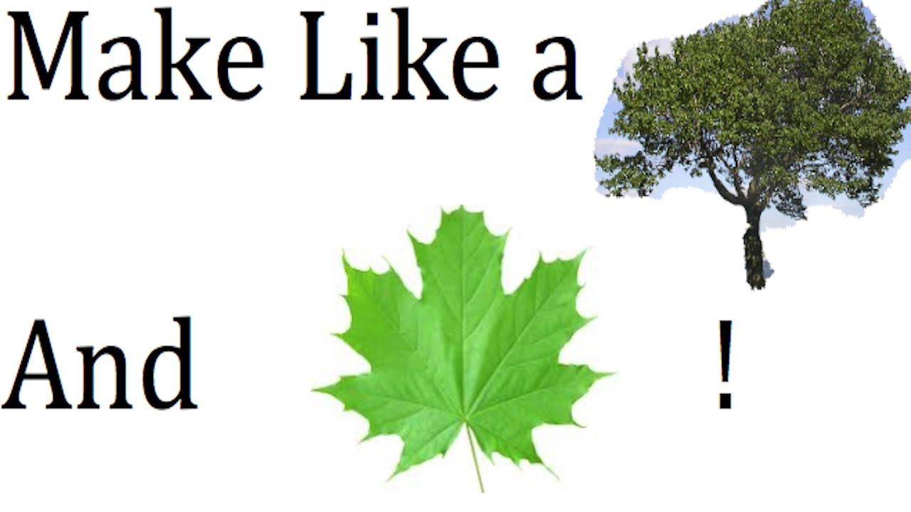 Make Like A Tree And Leaf 5 23 13 Day 717 Yto