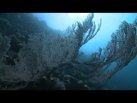 Serj Tankian - Orca Act II - Oceanic Subterfuge - Official Video