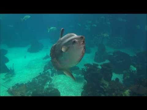 Lisbon Oceanarium  - Aquarium