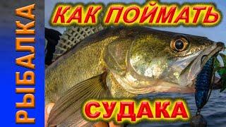 Рыбалка Ловим судака и щуку
