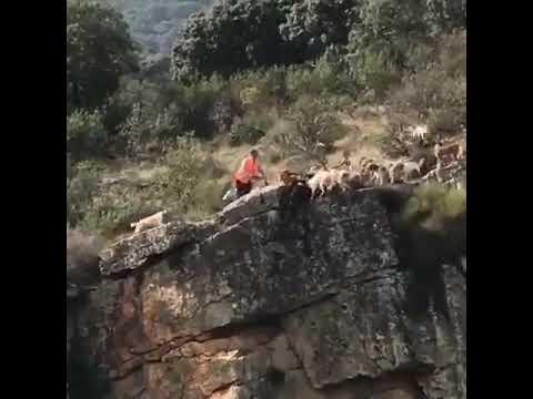 Un ciervo y varios perros caen despeñados por un barranco
